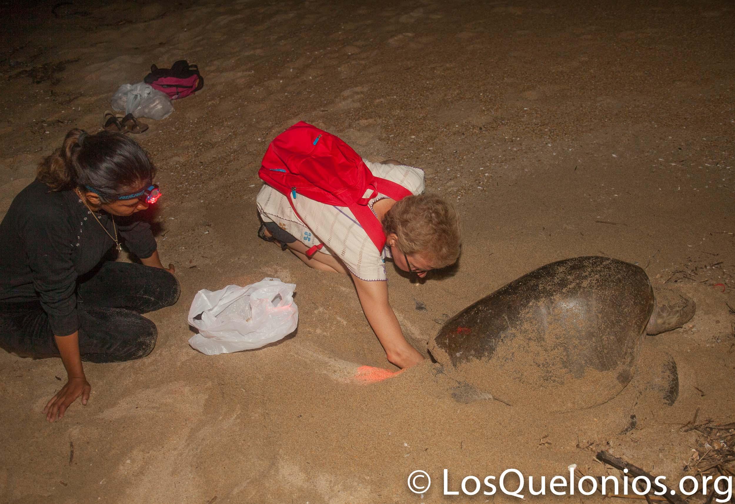 """Campamento Tortuguero Los Quelonios. Playa Ventura, Copala. Guerrero, México. - Colectando huevos para """"sembrarlos"""" en el vivero del campamento. LosQuelonios.org"""
