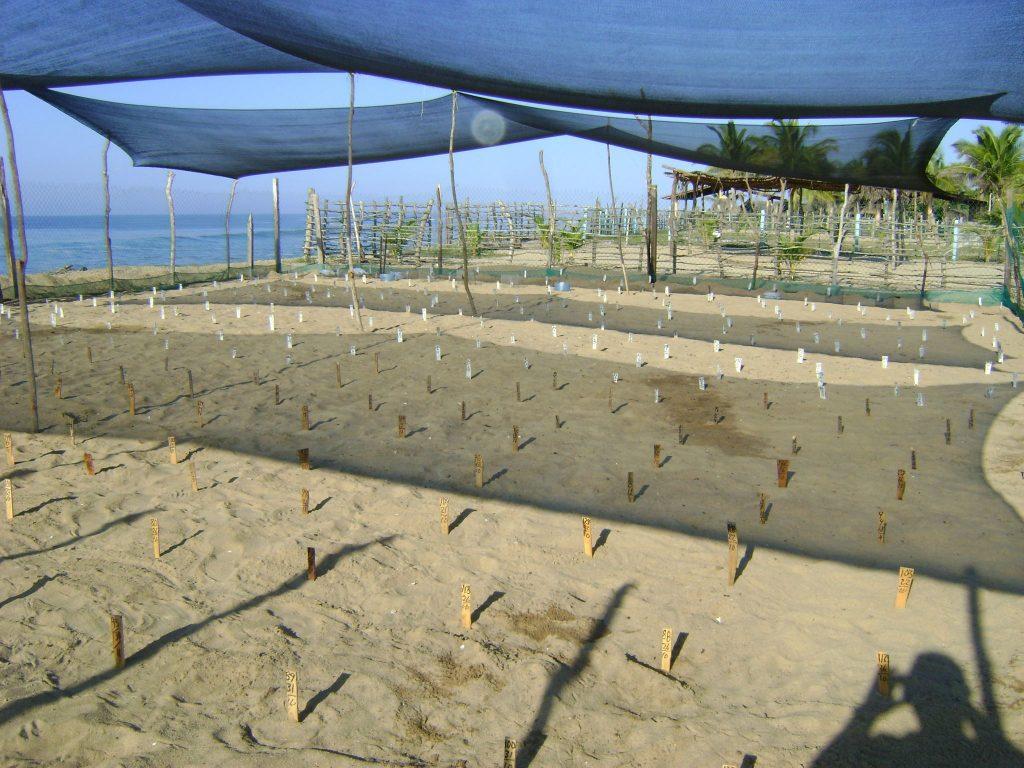 Campamento Tortuguero Los Quelonios. Playa Ventura, Copala. Guerrero, México - El vivero del campamento. LosQuelonios.org