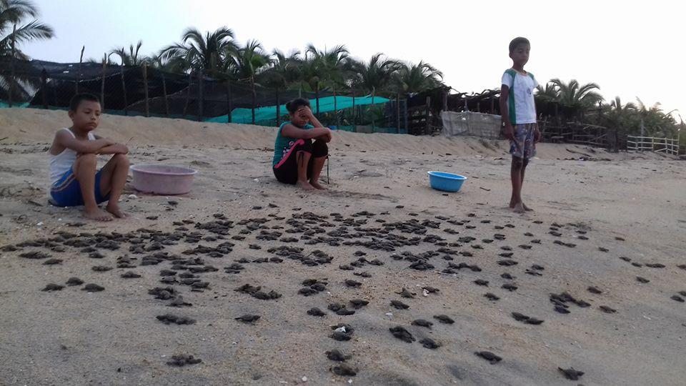 Campamento Tortuguero Los Quelonios. Playa Ventura, Copala. Guerrero, México - Niños apoyando el campamento tortuguero con la liberación de crías de tortugas. LosQuelonios.org